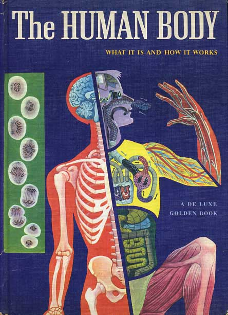 The Human Body: What it is ...